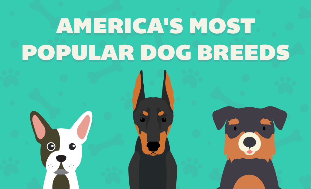 America's Most Popular Dog Breeds By State