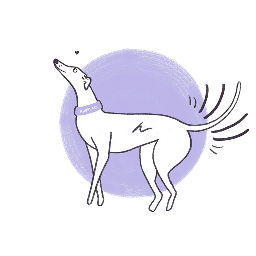House Hound - A Campaign to Encourage Greyhound Adoption