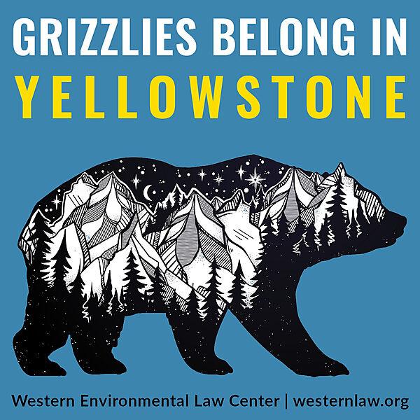 Sticker: Grizzlies Belong in Yellowstone